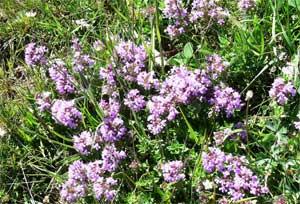 Медицина горного алтая целебные травы горного алтая фото где сдать анализы в тушино